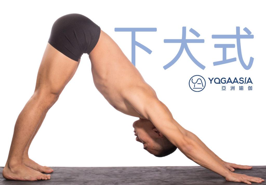下犬式 (Adho Mukho Svanasana;Downward Facing Dog Pose)